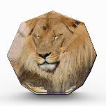 Adorable Lion Award