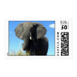 African Elephant Postage Stamp