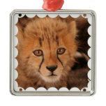 Baby Cheetah Ornament