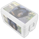 Black Spectacled Bear Ice Chest