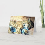 Bobcat Habitat Greeting Card