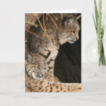 Bobcat Photos Greetign Card