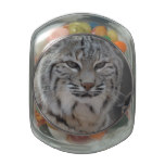 Creeping Bobcat Jelly Belly Candy Jars