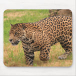 Jaguar Mouse Pad