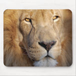 Lion Images Mouse Pad
