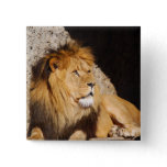 Lion Photo Square Pin