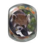 Prowling Red Panda Glass Candy Jars