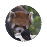 Prowling Red Panda Jelly Belly Tins