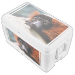 Resting Red Ruffed Lemur Ice Chest