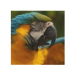 Ruffled Blue and Gold Macaw Wood Wall Art