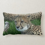 Spotted Cheetah Pillow