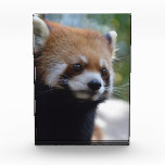 Sweet Red Panda Bear Award