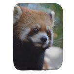Sweet Red Panda Bear Baby Burp Cloth