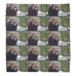 Sweet Red Panda Bear Bandana