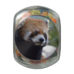 Sweet Red Panda Bear Jelly Belly Candy Jar