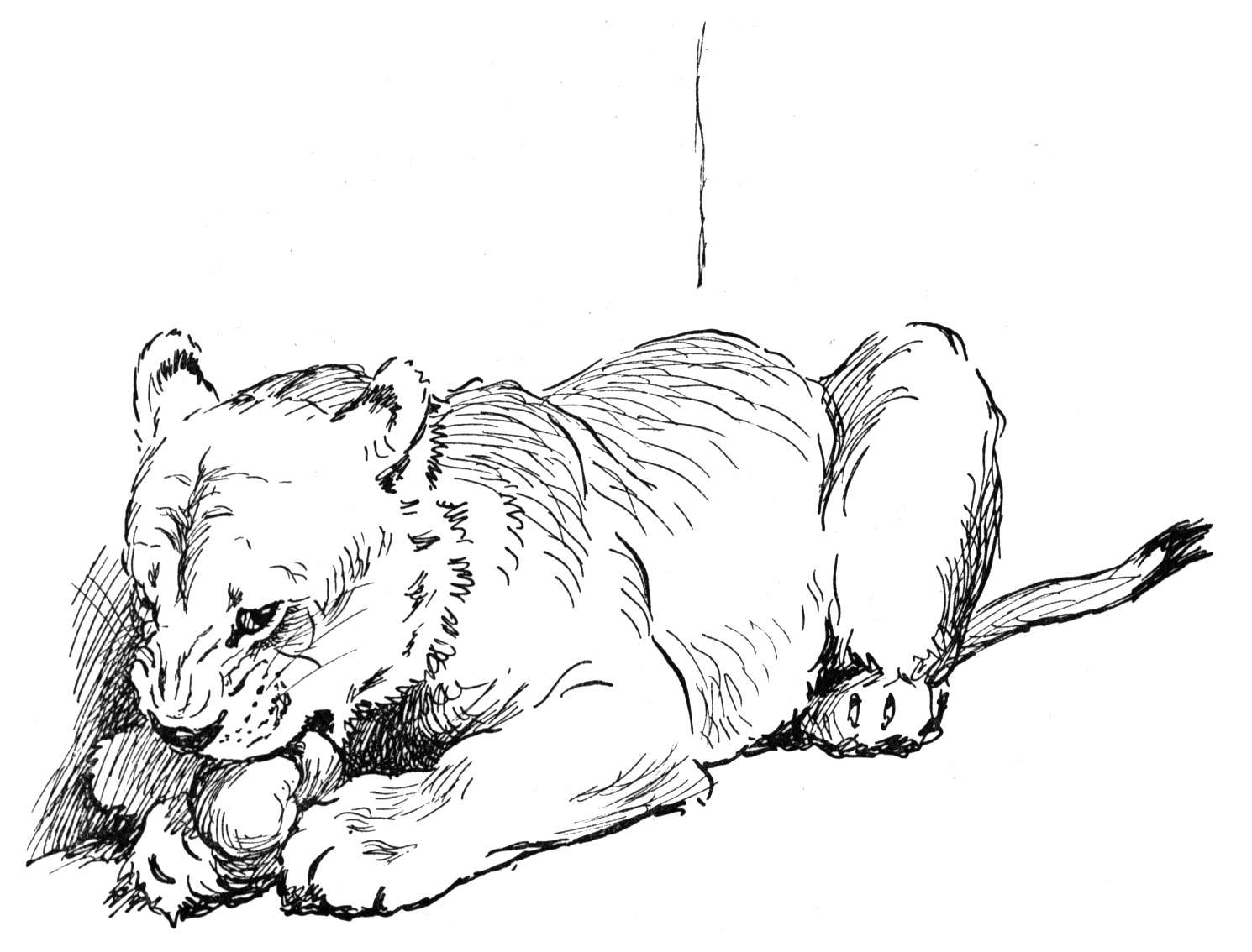 Big Cat Coloring Pages Big Cats Coloring Pages